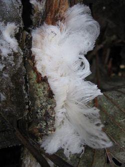 Flower Frost 003