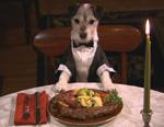Dogsbreakfast